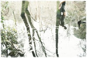 Non siamo che alberi - Elisa Bresciani